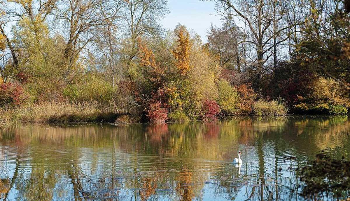 Naturschutzgebiet Häftli, Büren an der Aare