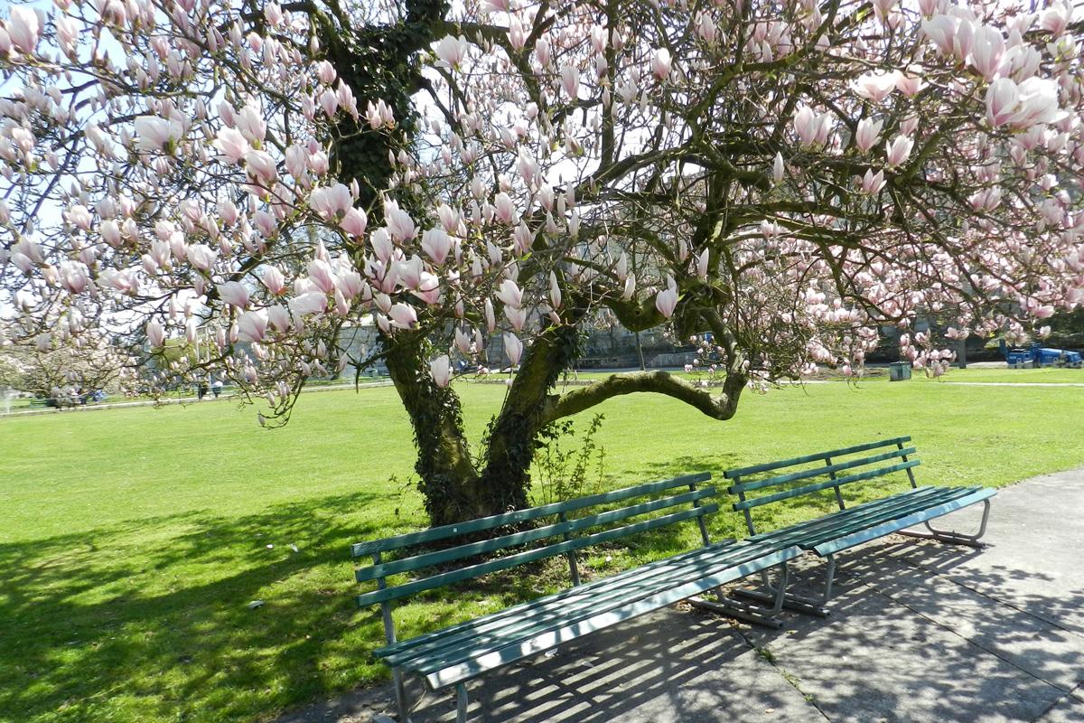 Frühling in Solothurn